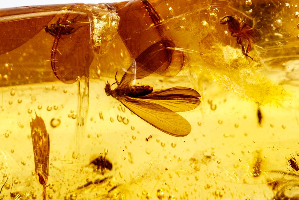 Генетики впервые извлекли ДНК насекомых в янтаре