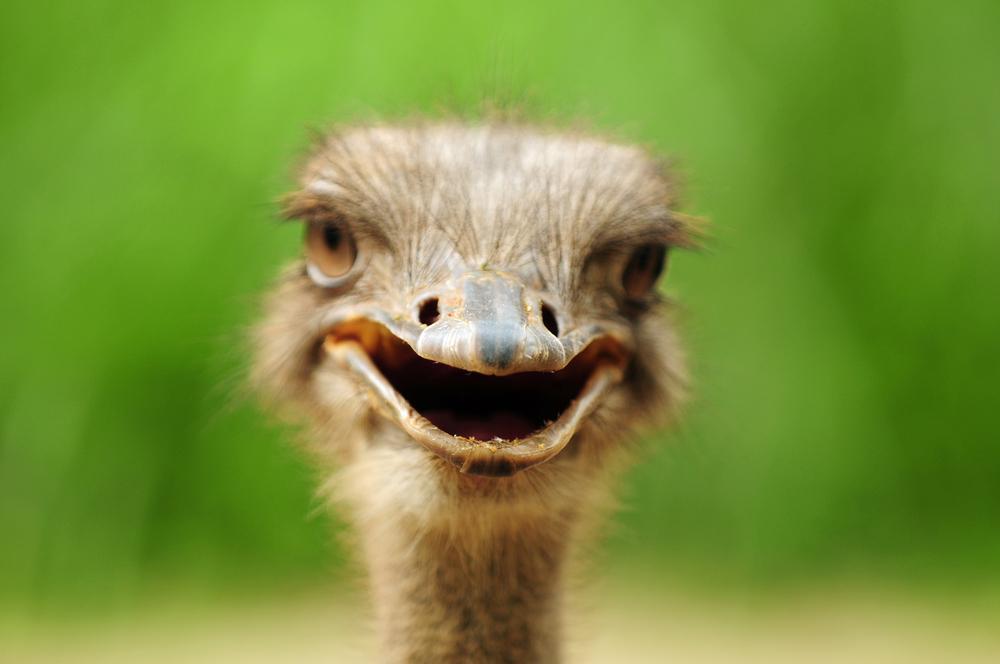 В ЮАР страус принял участие в велогонке.Вокруг Света. Украина