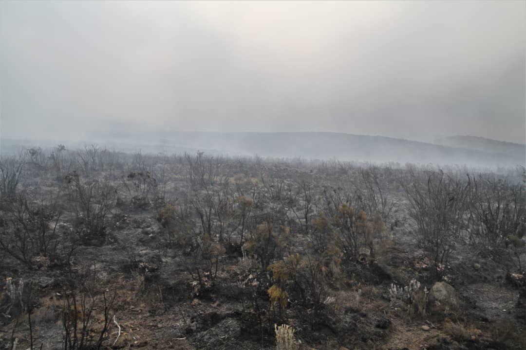Настала весна у Африці - почалися пожежі
