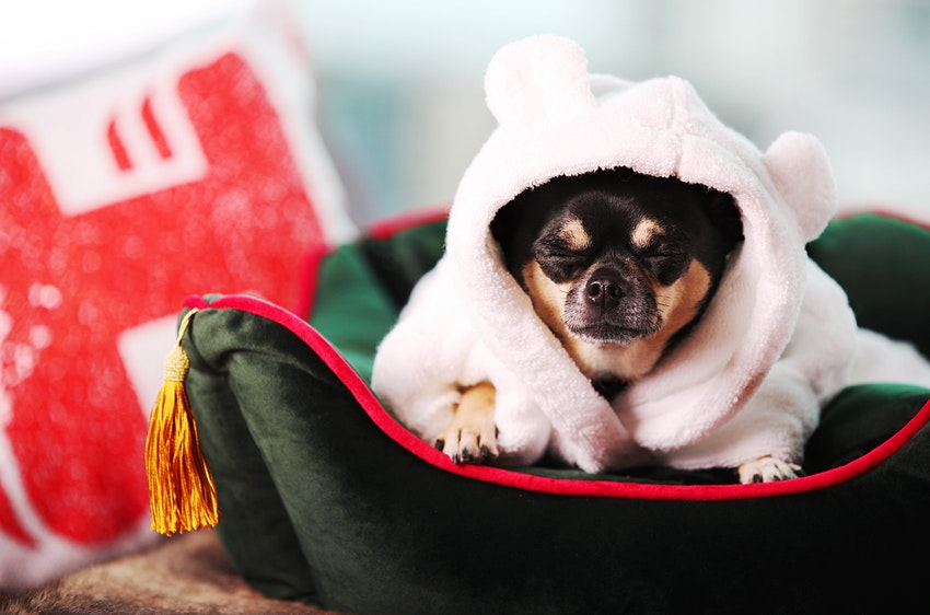 Работа мечты для вашего питомца: обозревать лучшие pet-friendly отели