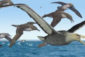 В Антарктиде нашли древнейшие кости гигантских ископаемых птиц