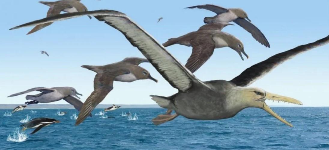 В Антарктиде нашли древнейшие кости гигантских ископаемых птиц.Вокруг Света. Украина