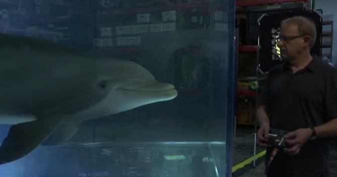 В США создали робота-дельфина для цирков