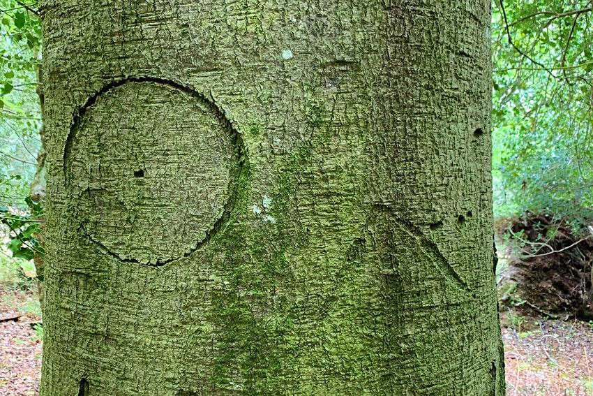 Окно в прошлое: британский нацпарк демонстрирует исторические метки на деревьях.Вокруг Света. Украина