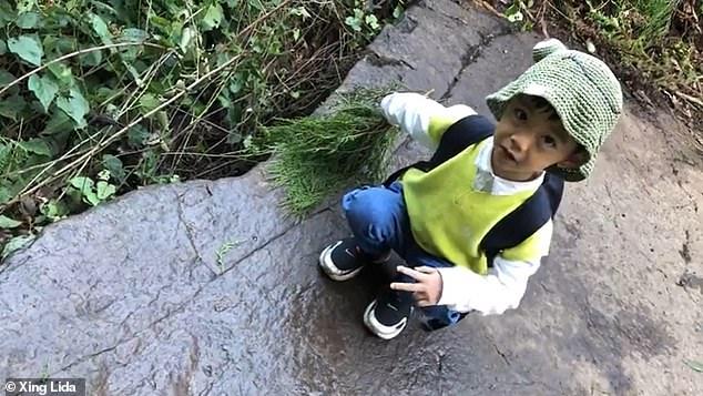 В Китае 5-летний мальчик обнаружил следы динозавровв деревне у дедушки.Вокруг Света. Украина