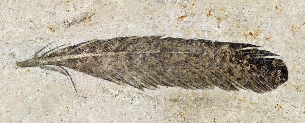 Древнейшее ископаемое перо принадлежит динозавру-археоптериксу.Вокруг Света. Украина