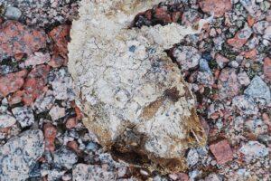 Тающие антарктические снега оголили останки 800-летнего мумифицированного пингвина