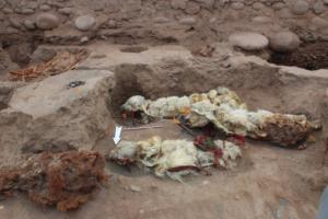 В Перу нашли мумии лам, похороненных заживо