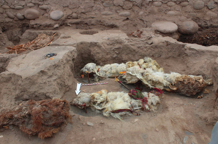 В Перу нашли мумии лам, похороненных заживо.Вокруг Света. Украина