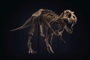 Один из крупнейших в мире скелетов тираннозавра продадут сегодня на аукционе