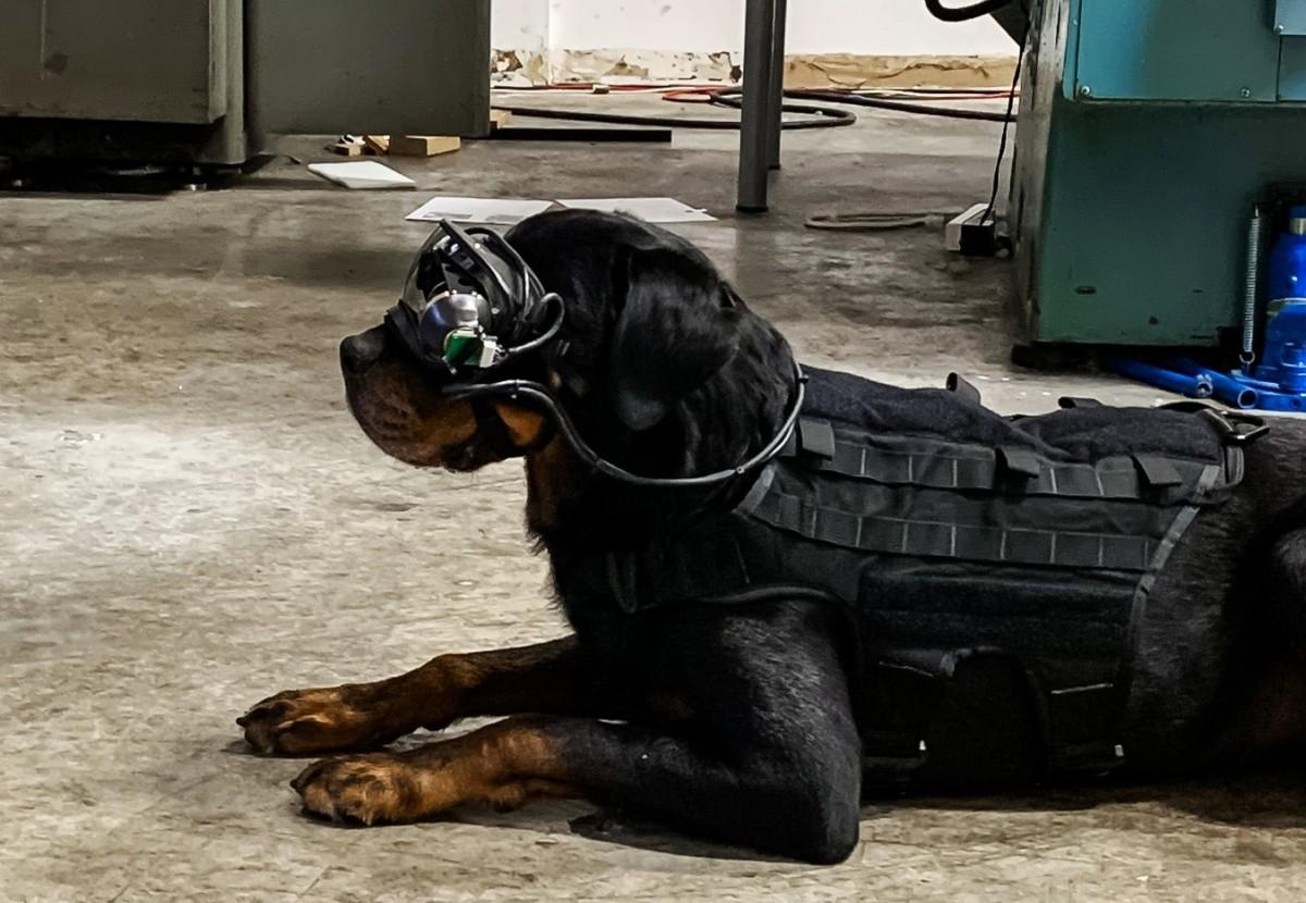 В армии США собакам выдали очки дополненной реальности.Вокруг Света. Украина