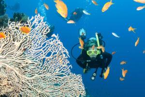 Большой Барьерный риф за 25 лет потерял половину кораллов