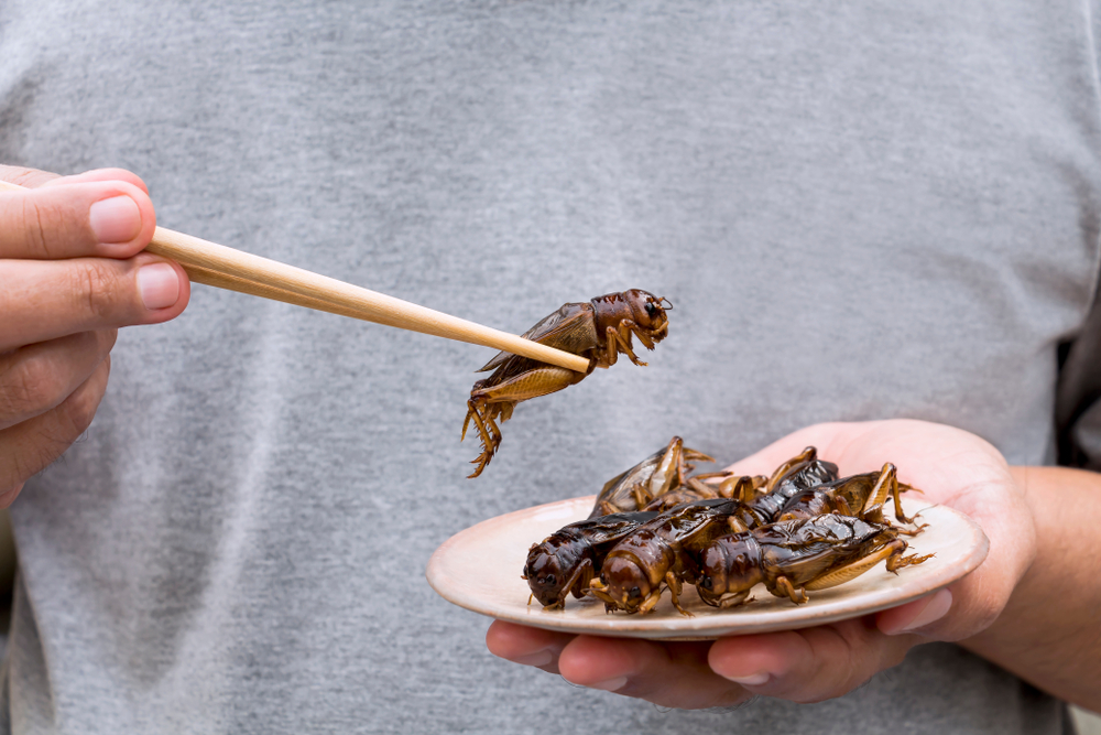 В магазинах Швеции появятся съедобные сверчки и черви