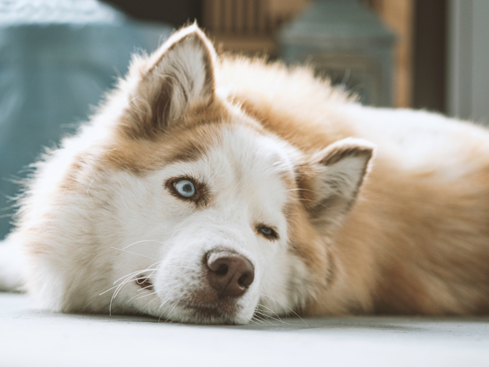 Как видят собаки?.Вокруг Света. Украина