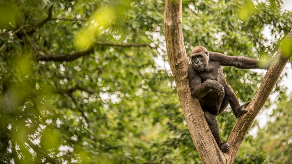 Уганда открывается для туристов с новыми правилами.Вокруг Света. Украина