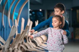 Во время онлайн-конференции палеонтологам запретили говорить слово «кость»