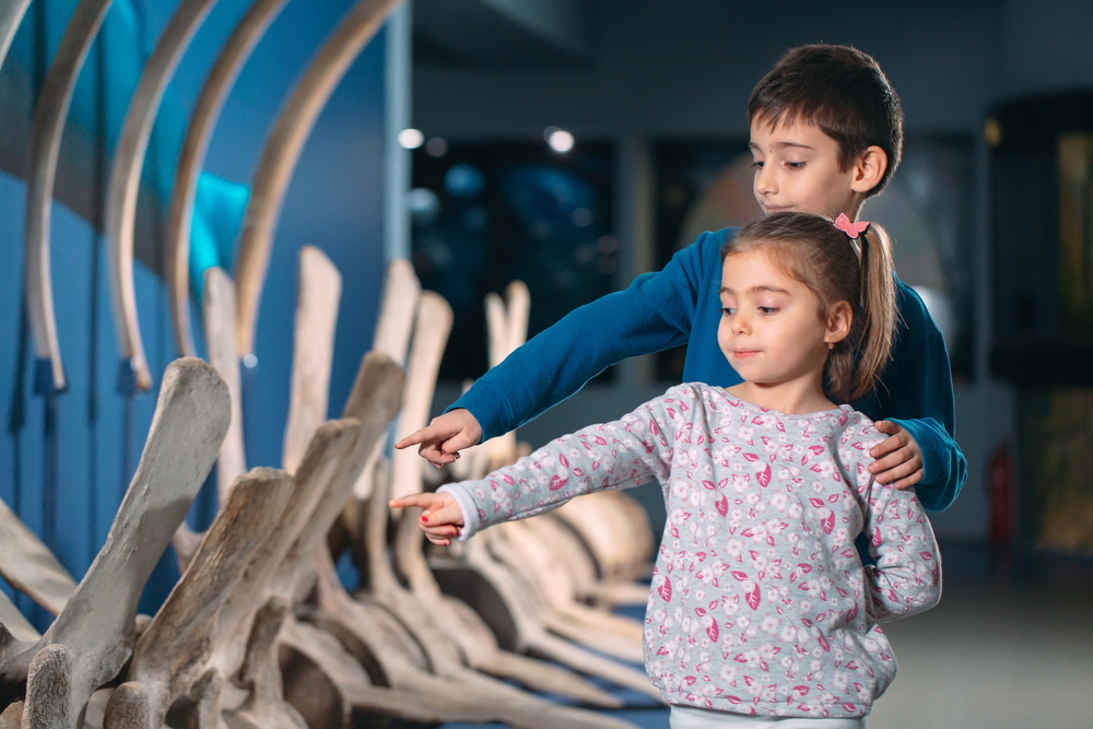 Во время онлайн-конференции палеонтологам запретили говорить слово «кость».Вокруг Света. Украина