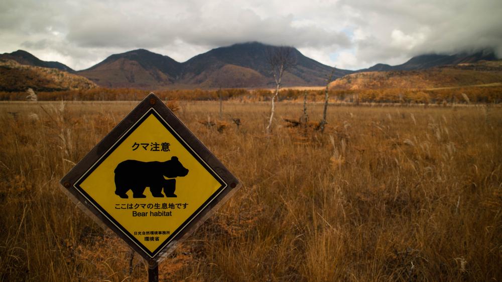 В Японии медведи стали чаще нападать на людей