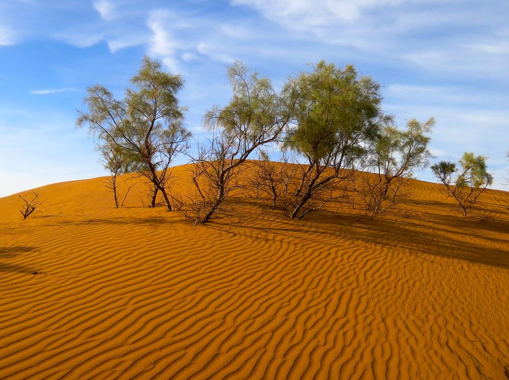 Неожиданное открытие: в пустыне Сахара растут миллионы деревьев.Вокруг Света. Украина