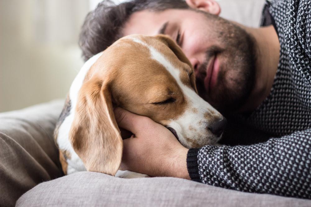 Собака – самый древний друг человека: анализ ДНК.Вокруг Света. Украина
