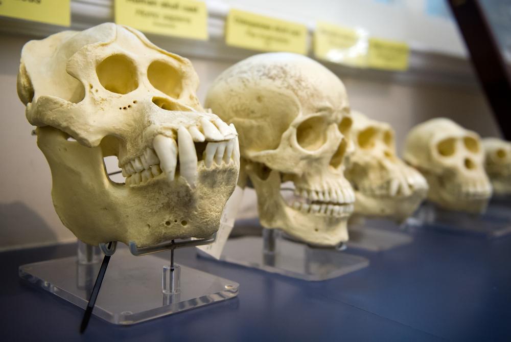 Способность к языку у приматов появилась еще 40 миллионов лет назад