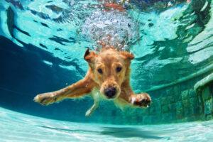 Интересные факты про собак