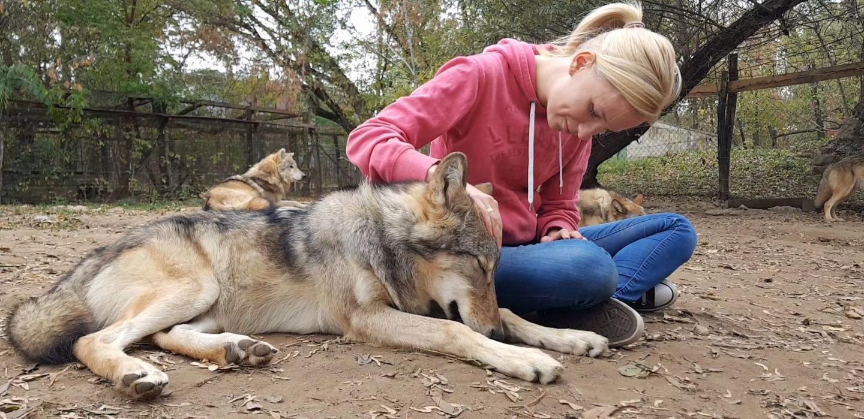 Волки привязываются к людям, которые их воспитали, так же, как собаки.Вокруг Света. Украина