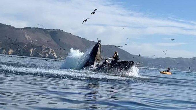 В Калифорнии горбатый кит чуть не проглотил каякеров.Вокруг Света. Украина