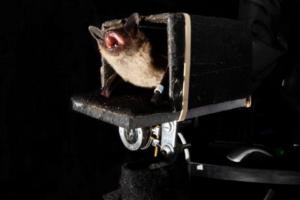 Летучие мыши предугадывают маршрут жертвы, как шахматисты