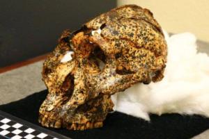 Обнаружен череп «кузена» человека: находке два миллиона лет