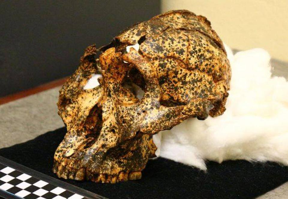 Обнаружен череп «кузена» человека: находке два миллиона лет.Вокруг Света. Украина
