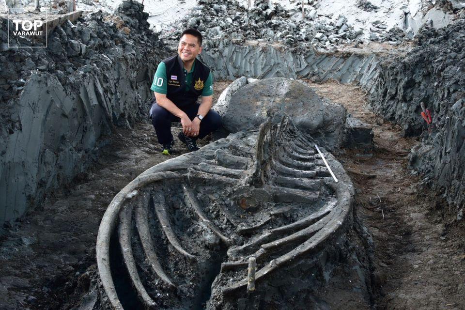 В Таиланде нашли хорошо сохранившийся скелет древнего кита