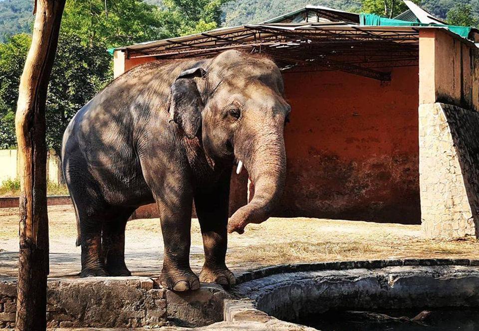 Самый одинокий слон мира меняет неволю на дикую природу.Вокруг Света. Украина