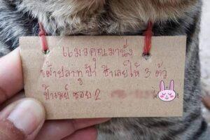 В Таиланде кот вернулся домой с долговой запиской