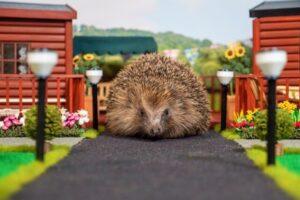 В Британии открыли первый в мире парк для ежей