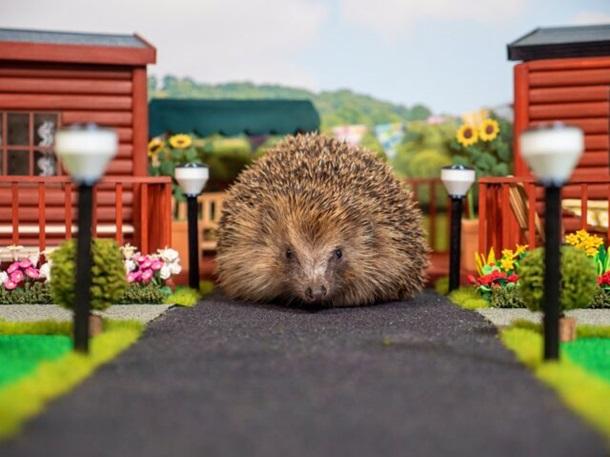В Британии открыли первый в мире парк для ежей.Вокруг Света. Украина