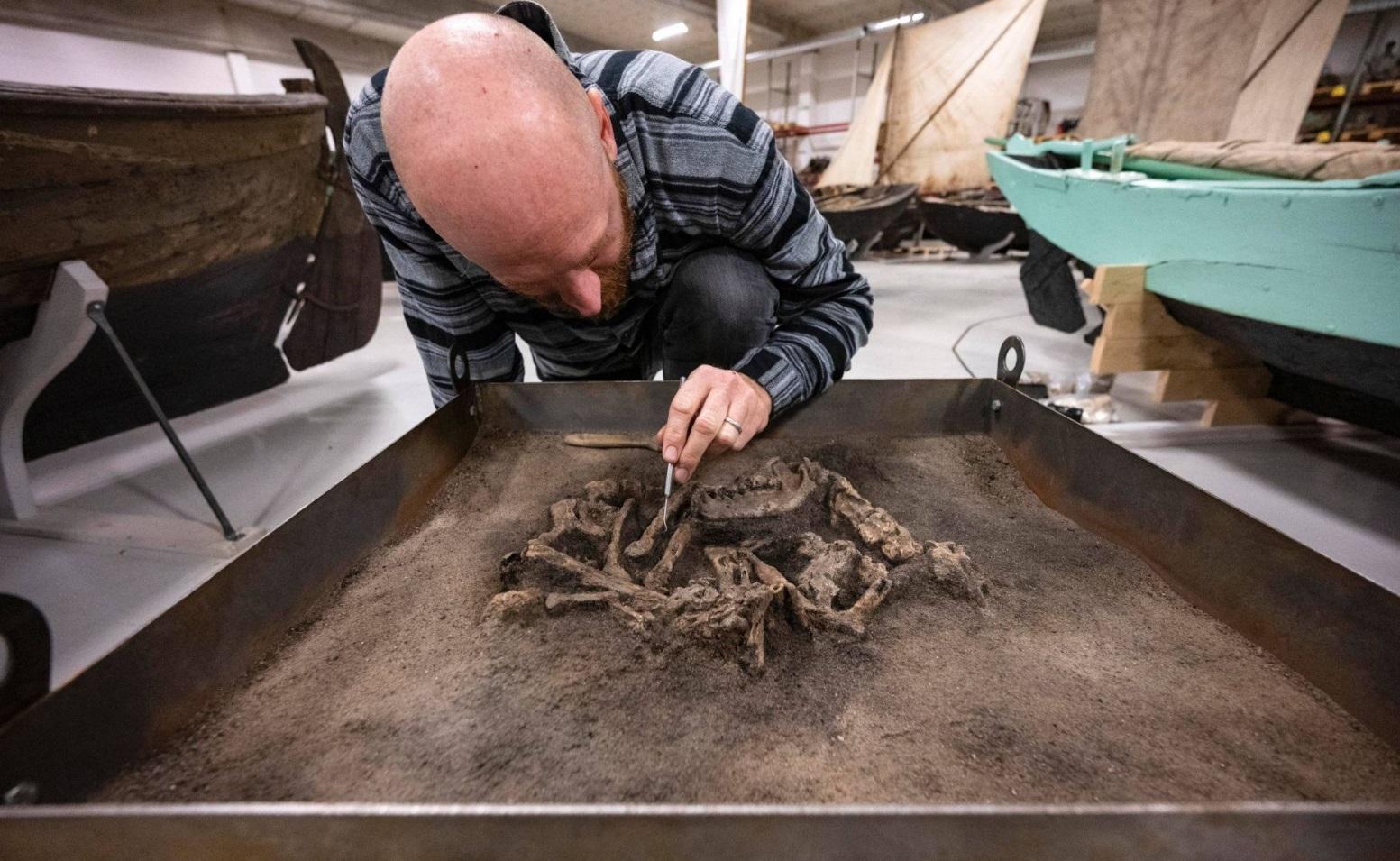 В Швеции нашли могилу собаки возрастом почти 8,5 тысяч лет