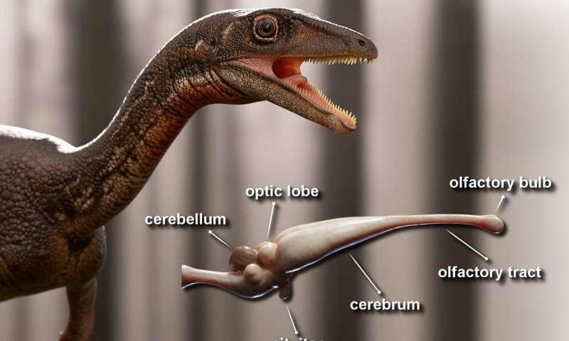В Бразилии реконструировали мозг динозавра.Вокруг Света. Украина