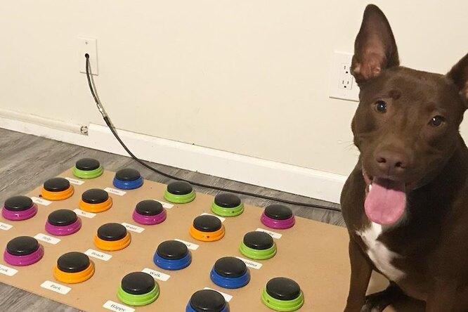 Американский логопед научила собаку «говорить»: видео.Вокруг Света. Украина