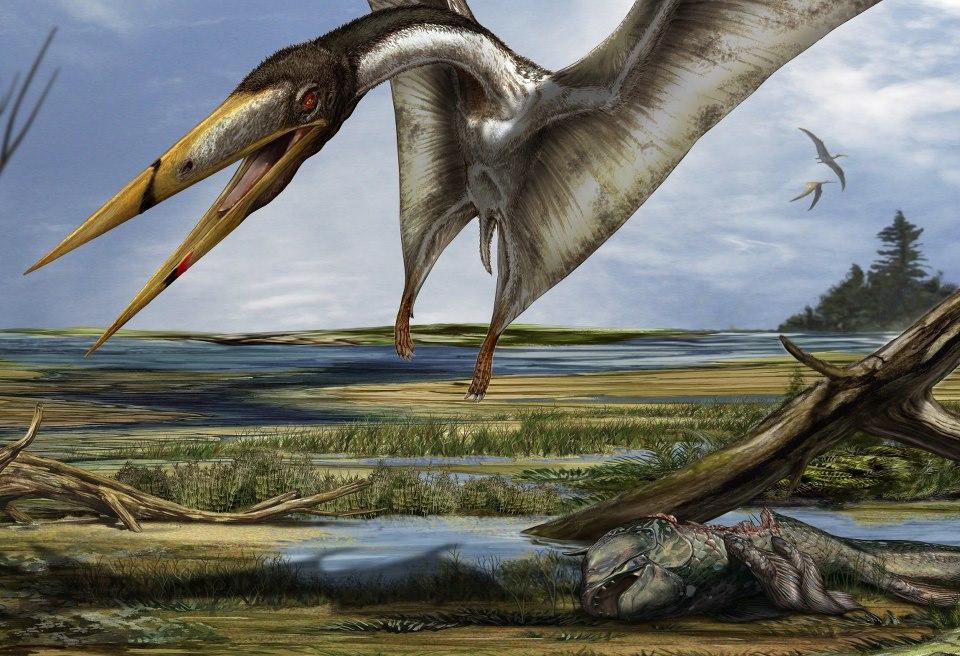 Останки неизвестного птерозавра 150 лет принимали за акульи.Вокруг Света. Украина