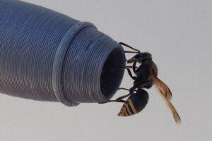 В Австралии осы угрожают самолетам