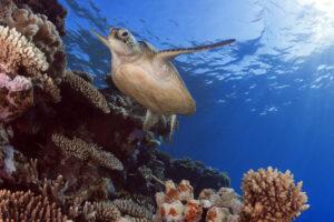 Ла-Нинья не спасет Большой Барьерный риф от обесцвечивания