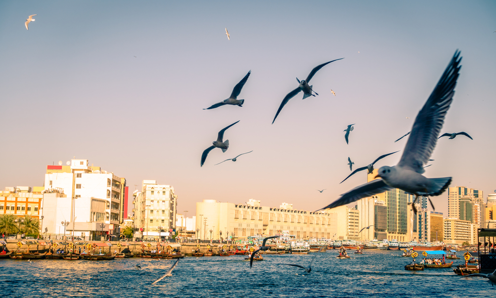 Чайки согласовывают свой распорядок дня с человеческим.Вокруг Света. Украина