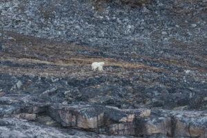 Крупнейшие банки США ради экологии отказались искать нефть в Арктике