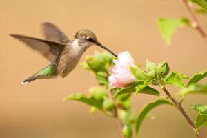 Ученые секвенировали геномы 363 видов птиц - ради сохранения видов