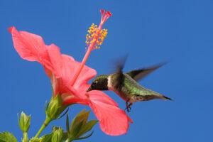 В Боготе на месте вырубленного леса открыли заповедник колибри