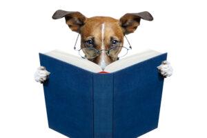 В Венгрии начался онлайн-конкурс на самую умную собаку в мире. Ваша тоже может поучаствовать