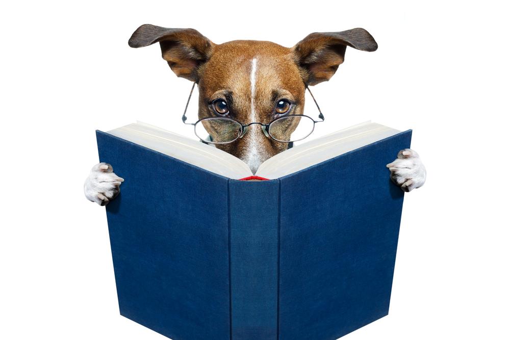 В Венгрии начался онлайн-конкурс на самую умную собаку в мире. Ваша тоже может поучаствовать.Вокруг Света. Украина