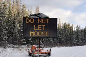 В Канаде лосям запрещают облизывать машины