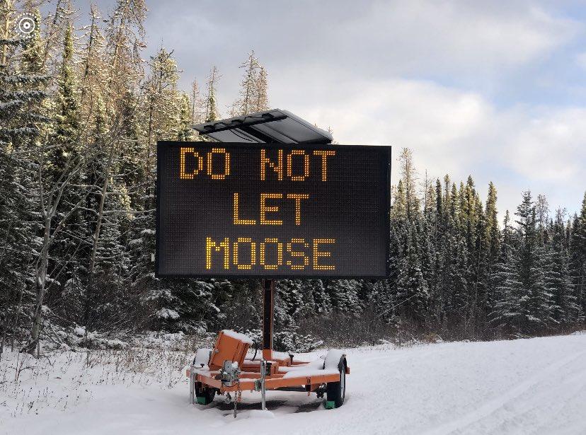 В Канаде лосям запрещают облизывать машины.Вокруг Света. Украина